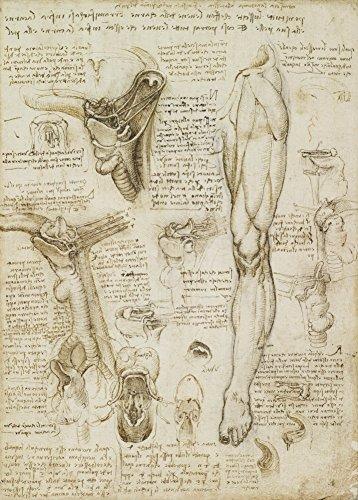 Vintage Anatomie LEONARDO da VINCI Lernen von Kehlkopf und Bein, Italien, 14-15 Jahrhundert. 250 g/m², glänzend, Kunstdruck, A3, Reproduktion (Zahlen Medizinische Diagramm)