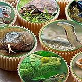 Print4you 24Kuchen, Cupcakes, 4cm, auf Zuckerguss –, Reptilien Schlangen, Bilder, Cupcake Eidechsen Frösche
