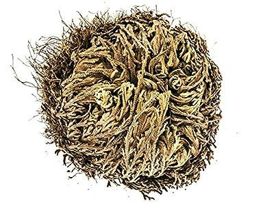 Yakeba Rose von Jericho - Selaginella lepidophylla - Mittel von Yakeba Natural Products bei Du und dein Garten