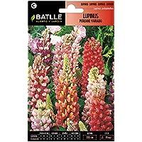 Semillas de Flores - Lupinus perenne variado - Batlle