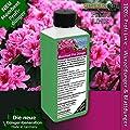 Rhododendron Dünger Azaleen düngen, Premium Flüssigdünger aus der Profi Linie von GREEN24 bei Du und dein Garten