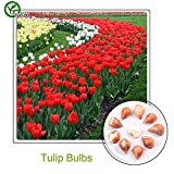 New Red Tulip bulbs seeds Bonsai Flower Seeds Potted Plants Flowers 5 Particles / Bag h003