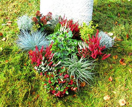 Grabbepflanzung Pflanzen-Set Urnengrab oder Einzelgrab 11 winterharte mehrjährige Pflanzen,und Stauden eine pflegeleichte und kreative Grabgestaltung