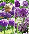 BALDUR-Garten Zierlauch Allium Sortiment, 13 Zwiebeln von Baldur-Garten - Du und dein Garten