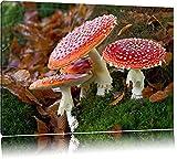 quatre champignon sur le sol de la forêt Toile, XXL photos complètement encadrée...