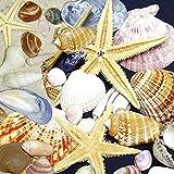 Artland Qualitätsbilder I Glasbilder Deko Glas Bilder 20 x 20 cm Tiere Wassertiere Muschel Foto Bunt A6EG Verschiedene Muscheln