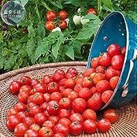 pinkdoseâ ® 2018heiãÿer Husky Cherry Red Tomate Semillas