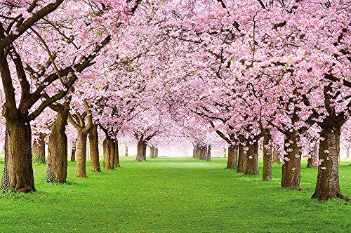 Fototapete Kirschblüten Wandbild Dekoration Blumen Frühling Garten Pflanzen Walt Park Natur Cherry Tree Kirschblütenbaum Allee Foto-Tapete Wandtapete Fotoposter Wanddeko,150cmX105cm(59.1 by 41.3 in)