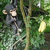 Affe Schimpanse 1
