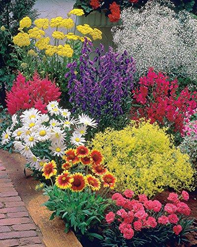 Willemse France Massif fleuri facile - 8 plantes vivaces