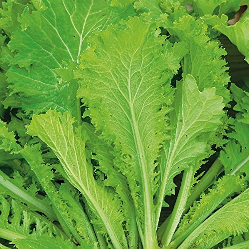 mustard-greens-southern-giant-500-seeds