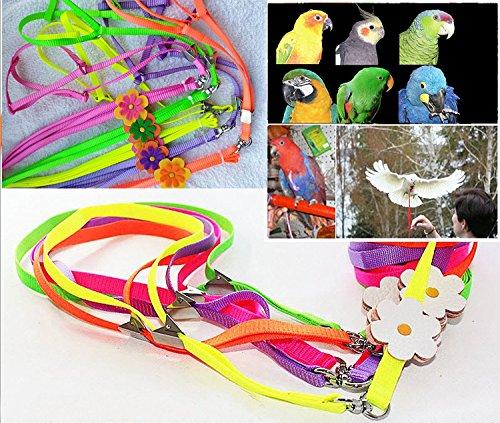 Bella pettorina regolabile per pappagalli e guinzaglio anti-beccata per pappagalli africani, cacatua grigi, are, parrocchetti e calopsiti (1 pz, colori assortiti)