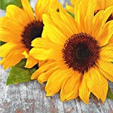 stewo Herbst Lunchservietten Sonnenblumen