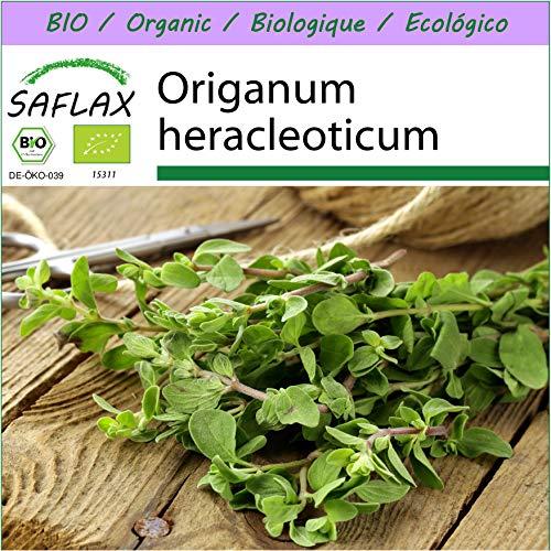 SAFLAX - BIO - Oregano - 1500 Samen - Origanum heracleoticum