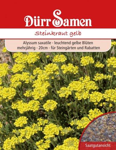 Dürr-Samen Steinkraut gelb