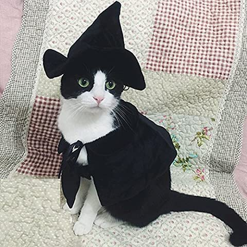 Chien Mignon Costumes Photos - Mignon à capuche Cape Sorcière/Assistant Costume pour