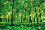 Foto mural Arboles ? decoración pura naturalesa paisaje bosque calvero verano relajación sol plantas Flora forstal helechos-ramaI I foto-mural foto pó