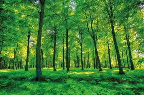 Foto mural Arboles - decoración pura naturalesa paisaje bosque calvero verano relajación sol plantas Flora forstal helechos-ramaI I foto-mural foto póster deco pared by GREAT ART (210x140 cm)