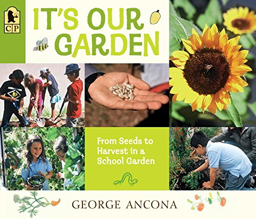 its-our-garden-from-seeds-to-harvest-in-a-school-garden