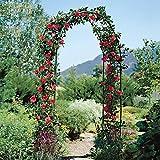 Qulista Garten Rankhilfe Kletterrosen Kletterpflanzen Rankgitter aus Metall, Geeignet für Balkon, Garten, Blumenbeet, Rosen,Tomaten,Bonsai (Typ 2)