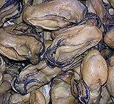 Produkt-Bild: Getrocknete Meeresfrüchte Austernfleisch 1700 Gramm aus Südchinesische Meer Nanhai