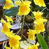 100pcs Beutel Dendrobium Samen Topf Samen Seltene Phalaenopsis-Orchideen-Blumen-Pflanzen Bonsai Gewächshaus der angehende Rate von 99%