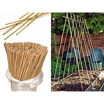 Wilsons Direct Natural Wooden Bamboo Canes Heavy Duty Plant Support Garden Thick Pole Garden Stake Canes Sticks 3ft, 4ft, 5ft, 6ft, 7ft (50, 3ft ...350 x 350 jpeg 33kB