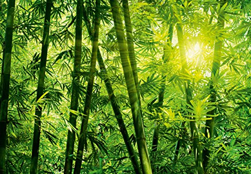 Fototapete - BAMBUSWALD - (123i) Größe 366x254 cm 8-teilig - Bambus Wald Bäume Sonne Landschaft Natur Wohnzimmer Kinderzimmer Küche- Motivtapete Postertapete Bildtapete Wall Mural