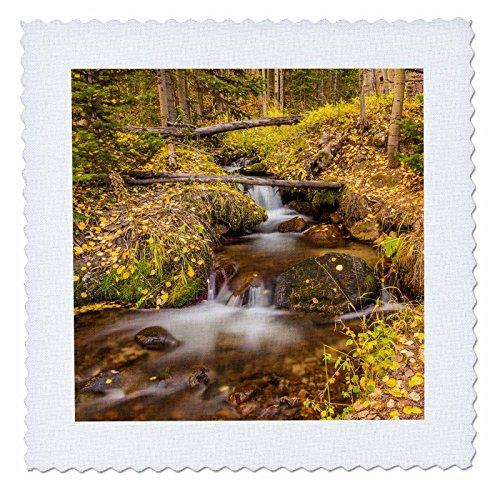 3dRose qs_278744_1 USA, Colorado, Rocky Mountain Np Nahaufnahme von männlichen Elchen im Bachlauf, quadratisch, 10 x 10 cm -
