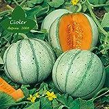 CIOLER Seed House - 20pcs Semillas Hortícolas Melón Categoría F1 crujiente (tipo Piel De Sapo) (híbrida) - Semillas de frutales