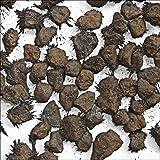Green Cross Toad Pietra Grezza Naturale Grezza Grezza in Magnetite Grezza per Collezionisti, 70 g