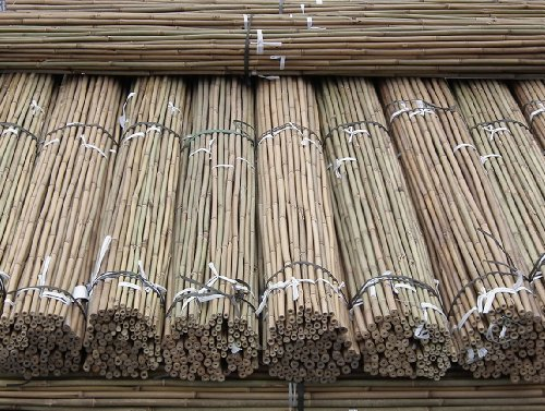 61ukAyOF EL - BEST BUY# Marko Gardening Heavy Duty 7FT Bamboo Canes Quality Plant Support Strong & Thick 2m (50) Reviews