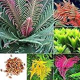 AGROBITS Typ 4: 100P Bunte Farn Samen Garten Balkon Pflanzen Creeping e s Er99