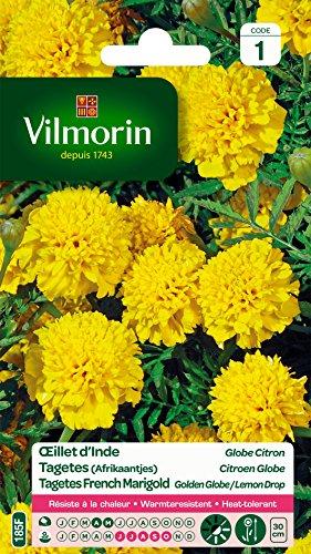 Vilmorin 5442141 Œillet, Jaune, 90 x 2 x 160 cm