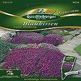 Blaukissen Bunte Mischung - Aubrieta deltoidea QLB Premium Saatgut Blumen zweijährig