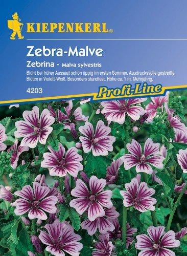 Garten-Malve Für die Beetbepflanzung