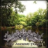 Songtexte von Nechochwen - The Ancient Pulse