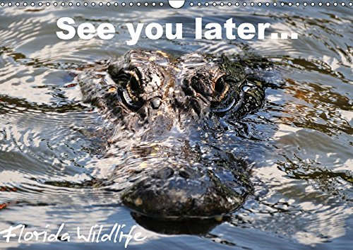 See you later Florida Wildlife (Wandkalender 2019 DIN A3 quer)