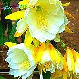 30 Stücke / Beutel Schlumbergera Seed Crab Cactus Sementes Bonsai Topf Balkon Bepflanzung für Garten-Dekoration-Geschenk