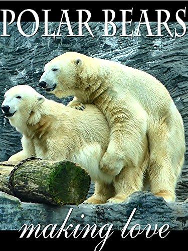 polar-bears-making-love