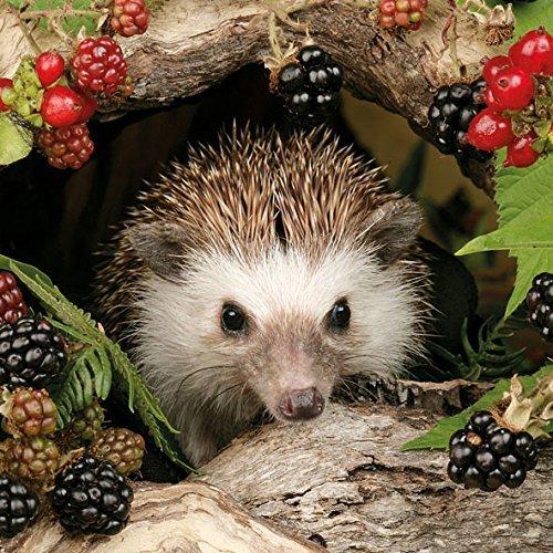 Ambiente Servietten Lunch / Party / ca. 33x33cm Herbst - Autumn - Hedgehog - Igel - Balckberries -Brombeeren