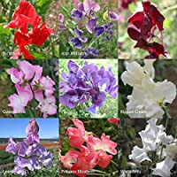 Kings Seeds Sweet Pea Kings Chelsea Scented Collection