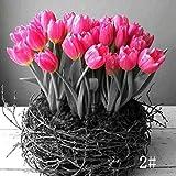 SOTEER Tulpen ziertulpen Blumen Seltene Samen Bunte Tulpen Samen 'Insulinde', Zomerschoon - 100 Samen/Pack - mehrjährig