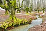 Posterlounge Forex-Platte 60 x 40 cm: Beechwood and Rivulet. Otzarreta, Gorbeia Natural Park, Biscay, Spain, Europe. von Age fotostock/Mauritius Images