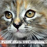 Petits Chats Tres Mignons 2018: Photos Fascinantes Des Tigres De Salon Prises En Gros Plan.