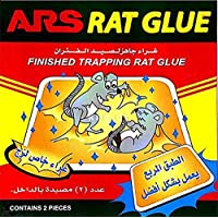Finished Trapping Rat Glue