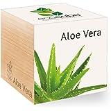 Feel Green Ecocube Aloe Vera Exotics, Idée Cadeau (100% Ecologique), Grow-Your-Own/Kit Prêt-à-Pousser, Plantes Dans Des Cubes