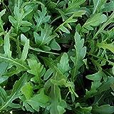 #10: Wild Rocket Herb Leaves Gardening Seeds Pack Of 1000 Seeds by AllThatGrows