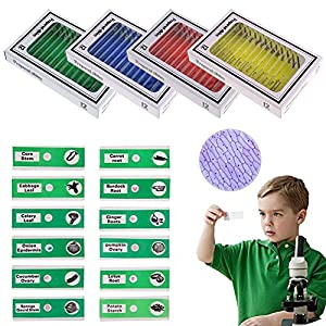 Jiusion 48Pcs Prepared Microscope Slides Specimen Animals Insects Plants Flowers Sample Biological Specimen, Stereo Microscope Slide for Kids Children Students Enlighten Education