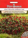 Mini Petunien Kabloom Red, Zauberglöckchen Samen Calibrachoa x hybrida